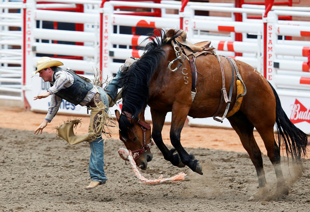 Rhett Fox of Redig, South Dakota, gets bucked off the horse C Z8 in the novice saddle bronc event during the Calgary Stampede rodeo in Calgary, Alberta, Canada July 8, 2016. (Photo by Todd Korol/Reuters)
