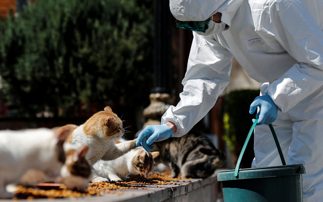 A municipality worker in a protective suit feeds street cats at Sultanahmet Square, as the spread of coronavirus disease (COVID-19) continues in Istanbul, Turkey, April 9, 2020. (Photo by Umit Bektas/Reuters)