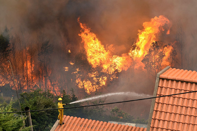 A firefighter stands on a roof of a house and tries to extinguish a wildfire at Curral dos Romeiros, Funchal in Madeira island on August 9, 2016. Several houses were destroyed by multiple blazes in the region of Funchal and some 250 people were evacuated to spend the safe night in military installations, said the head of the Civil Protection government regional, Rubina Leal. (Photo by Joana Sousa/AFP Photo)