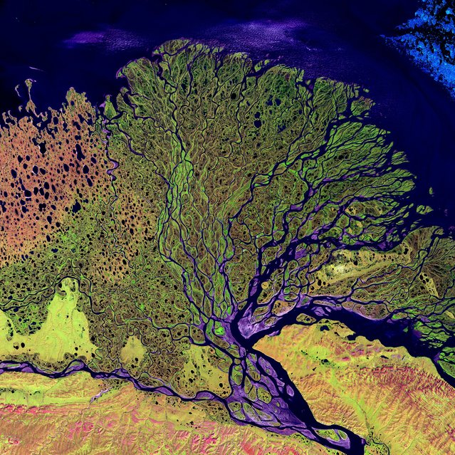 Lena River Delta. The Lena River, some 4,500 km long, is one of the largest rivers in the world. The Lena Delta Reserve is the most extensive protected wilderness area in Russia. It is an important refuge and breeding ground for many species of Siberian wildlife. This is a false-color composite image made using shortwave infrared, infrared, and red wavelengths. Image taken July 27, 2000, by Landsat 7. (Photo by NASA/GSFC/USGS EROS Data Center)