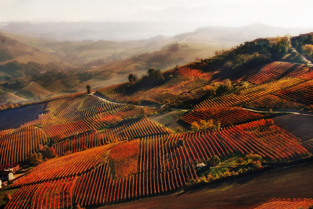 """""""Red mist in Alba"""". An autumnal glimpse of vineyards near Alba in the Langhe hills of Piedmont. Second place: Wine. (Photo by Valentina Galvagno/SIPA Contest)"""