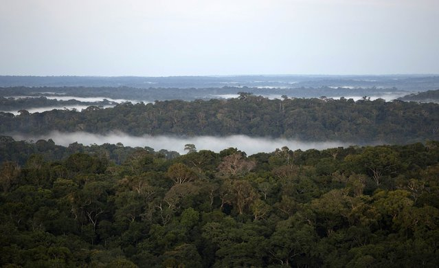 A view is seen from the Amazon Tall Tower Observatory (ATTO) in Sao Sebastiao do Uatuma in the middle of the Amazon forest in Amazonas state January 8, 2015. (Photo by Bruno Kelly/Reuters)