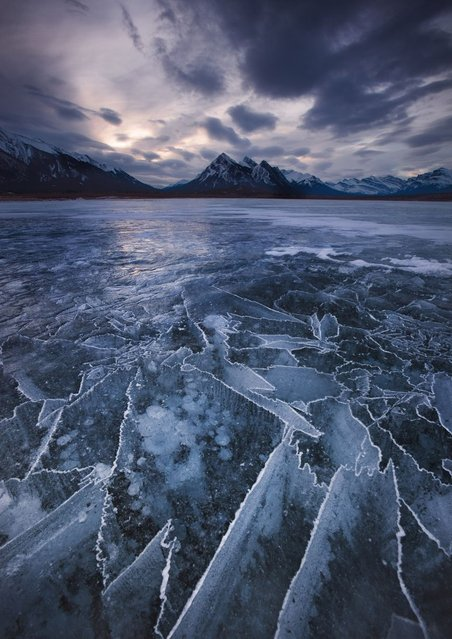 Ice bubbles in Abraham Lake, located at the foot of the Rocky Mountains in Canada. (Photo by Chip Phillips/Rex Features)