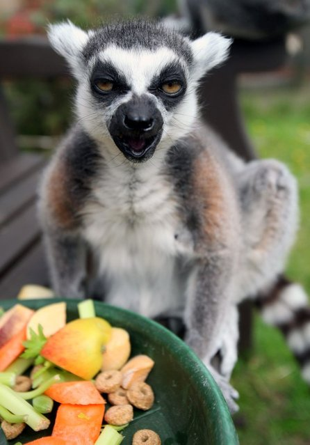 Stumpy currently lives at Five Sisters Zoo in West Calder. (Photo by Hemedia/Swns Group)