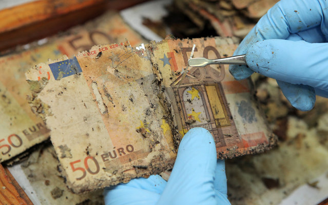 A German Federal Bank employee unravels the safety thread of flood-damaged fifty euro banknotes at the counterfeit analysis center in Mainz, Germany on July 15, 2013 in order to separate and count the notes. After the devastating flood in June 2013 in eastern and southern Germany, more than a hundred thousand damaged banknotes have already been registered by the German Federal Bank. The money can be exchanged without charge. (Photo by Fredrik Von Erichsen/AFP Photo/Dpa)