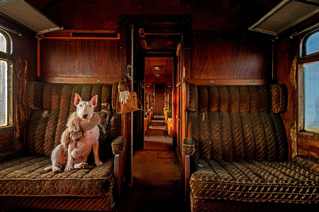 Claire travelling in an abandoned train in Belgium. (Photo by Alice van Kempen/Caters News)