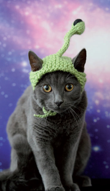 "This photo provided by Running Press and Quarto, Inc. shows Extraterrestrial from the book, ""Cats in Hats"", published by Running Press. (Photo by Liz Coleman/Running Press/Quarto, Inc. via AP Photo)"