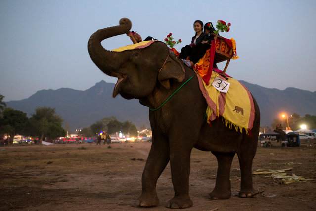 Girls ride an elephant before taking part in an elephant festival, which organisers say aims to raise awareness about elephants, in Sayaboury province, Laos February 16, 2017. (Photo by Phoonsab Thevongsa/Reuters)