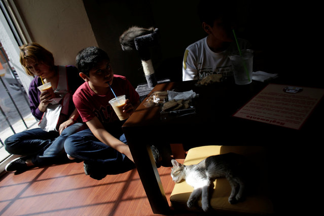 """A cat sleeps under a table while customers enjoy their drinks inside """"Meow"""" cafe, where diners can play, interact or adopt cats given away by their former owners or rescued from the streets, in Monterrey, Mexico, May 14, 2016. (Photo by Daniel Becerril/Reuters)"""