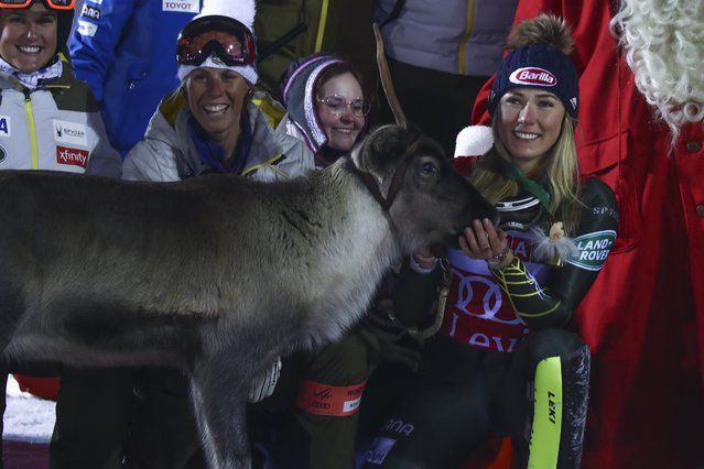 United States' Mikaela Shiffrin feeds a reindeer during the podium ceremony after winning an alpine ski, women's slalom in Levi, Finland, Saturday, November 23, 2019. (Photo by Alessandro Trovati/AP Photo)