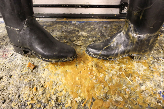 Riding boots dry out in the cleaning room after receiving a coating of hot wax at The Household Cavalry Mounted Regiment (HCMR) in Hyde Park Barracks
