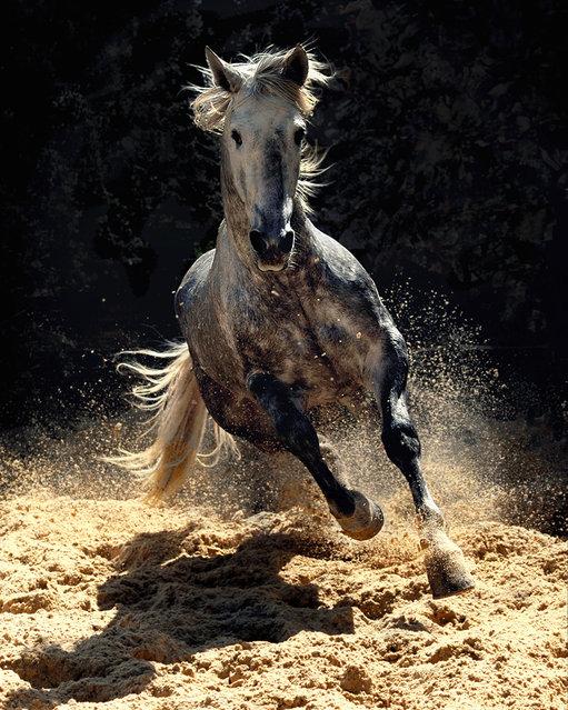 Horses by Wojtek Kwiatkowski