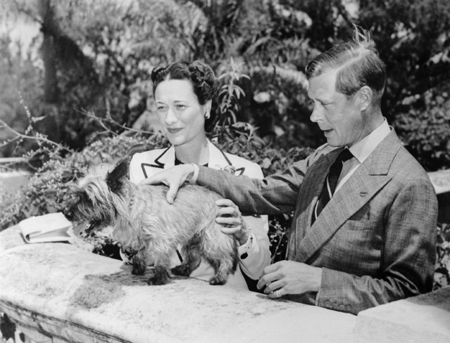 The Duke and Duchess of Windsor, Prince Edward and Wallis Simpson, with one of their pet dogs at Government House in Bermuda on August 11, 1940. They are to depart for Nassau where the duke will assume his duties as governor of the Bahamas. (Photo by AP Photo)