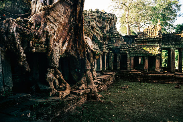 The well known Ta Prohm temple, made famous in the Tomb Raider film. (Photo by Alex Teuscher/Caters News)