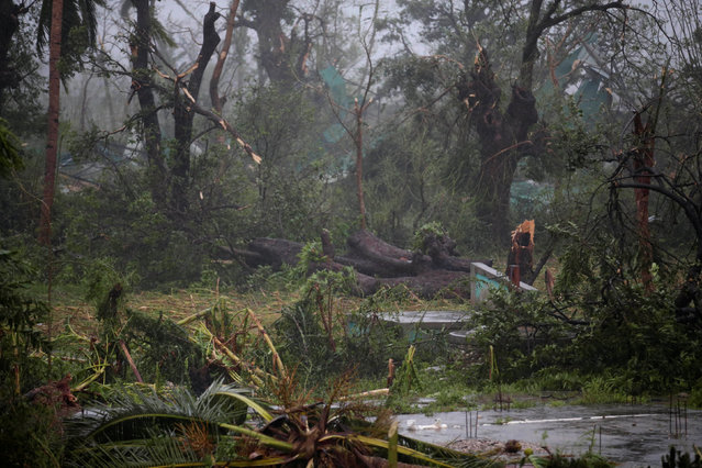 A view of trees damaged by the wind during Hurricane Matthew in Les Cayes, Haiti, October 4, 2016. (Photo by Andres Martinez Casares/Reuters)