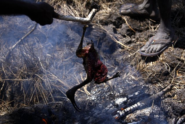 """Australian Aboriginal hunters Bruce and Robert Gaykamangu of the Yolngu people cook a Magpie Goose they just shot near the """"out station"""" of Ngangalala, located on the outksirts of the community of Ramingining in East Arnhem Land November 25, 2014. (Photo by David Gray/Reuters)"""