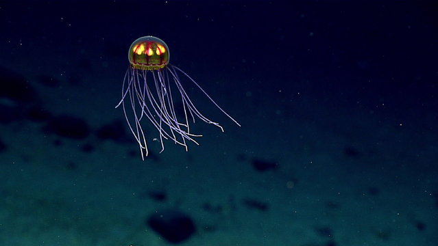 This April 24, 2016 image made available by NOAA shows a bioluminescent jellyfish during a deepwater exploration of the Marianas Trench Marine National Monument area in the Pacific Ocean near Guam and Saipan. (Photo by NOAA Office of Ocean Exploration and Research via AP Photo)