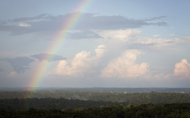 A rainbow is seen from the Amazon Tall Tower Observatory (ATTO) in Sao Sebastiao do Uatuma in the middle of the Amazon forest in Amazonas state January 8, 2015. (Photo by Bruno Kelly/Reuters)