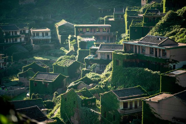 This picture taken on June 1, 2018 shows abandoned village houses covered with overgrown vegetation in Houtouwan on Shengshan island, China' s eastern Zhejiang province. Houtouwan was a thriving fishing community of sturdy brick homes that climb up the steeply hilled island of Shenghshan, but is now abandoned, with entire houses completely overgrown as if vacuum- sealed in a lush layer of green. Only a handful now live in the isolated outpost, which lies east of Shanghai and was once home to more than 2,000 fishermen. The only thing halting the village from being completely swallowed up by vegetation are the crowds of tourists drawn to its other-worldly landscapes. Houtouwan was established in 1950 and prospered over the decades on the Yellow Sea's plentiful riches. But its tiny harbour finally proved too small for larger vessels needed to sustain fishing, and the ships were diverted to larger ports instead. These amazing pictures show what was left behind... (Photo by Johannes Eisele/AFP Photo)