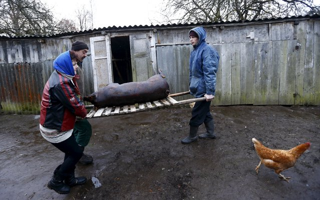 Belarussian villagers carry a cooked pig in the village of Azerany, Belarus, December 12, 2015. (Photo by Vasily Fedosenko/Reuters)