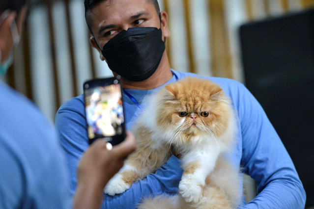 A participant holds his cat during during a cat show in Banda Aceh on February 28, 2021. (Photo by Chaideer Mahyuddin/AFP Photo)