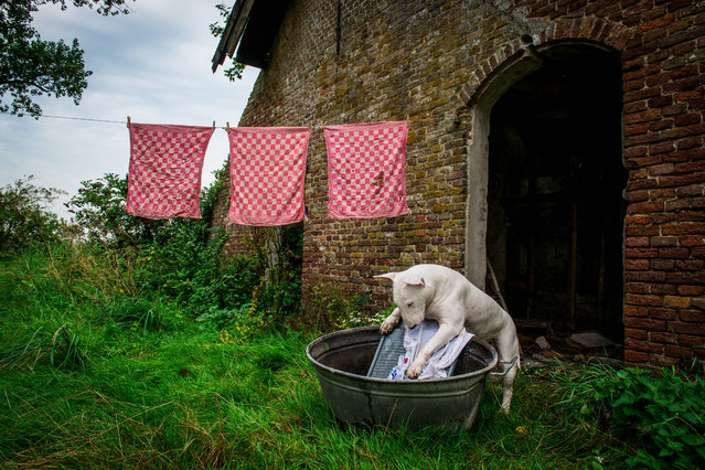 Claire doing the washing an abandoned farmshouse in Netherlands. (Photo by Alice van Kempen/Caters News)