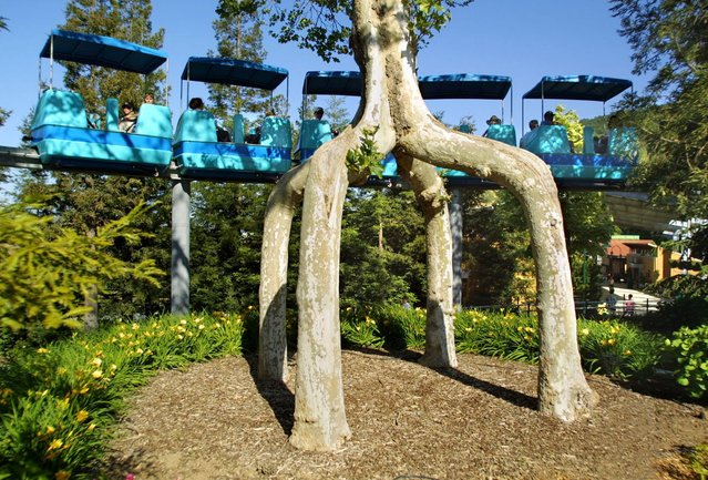 The Weird Shaped Trees Of Axel Erlandson