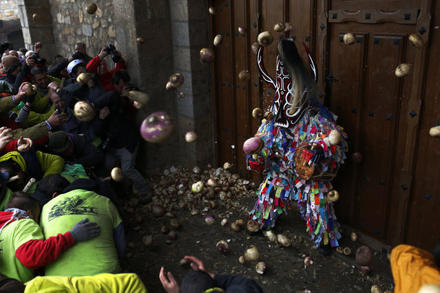 People throw turnips at the Jarramplas as he makes his way through the streets beating his drum, during the Jarramplas festival in Piornal, Spain, Wednesday, January 20, 2016. (Photo by Francisco Seco/AP Photo)