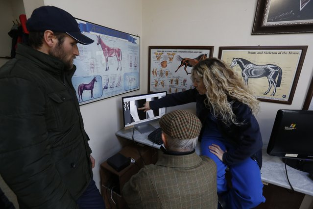 Head of veterinary surgery Hulya Hartoka (R) points at an X-ray of a racehorse as she speaks to the owner at Veliefendi equine hospital in Istanbul March 3, 2015. (Photo by Murad Sezer/Reuters)