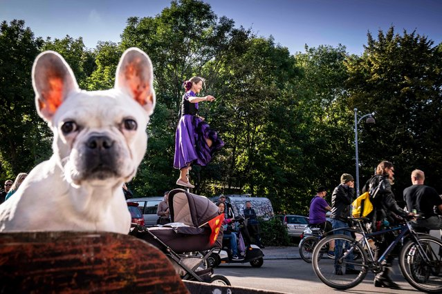 A dog looks on as people take part in a parade in Copenhagen, Denmark, on September 22, 2021, to mark the 50th anniversary of Freetown Christiania from the free town to the Town Hall Square in Copenhagen. (Photo by Mads Claus Rasmussen/Ritzau Scanpix via AFP Photo)