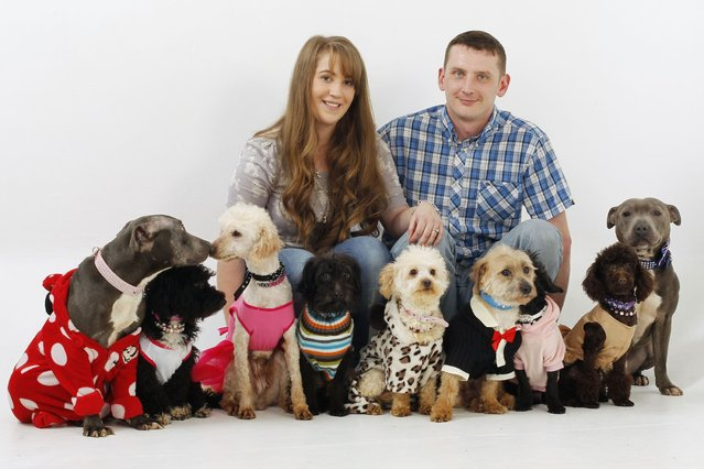 Emmie Stevens and boyfriend Barry Stears with her nine dogs. (Photo by Helen Yates/Barcroft Media)