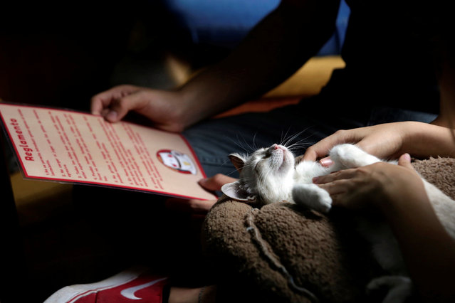 """A customer pets a cat while another looks at a menu inside """"Meow"""" cafe, where diners can play, interact or adopt cats given away by their former owners or rescued from the streets, in Monterrey, Mexico, May 13, 2016. (Photo by Daniel Becerril/Reuters)"""