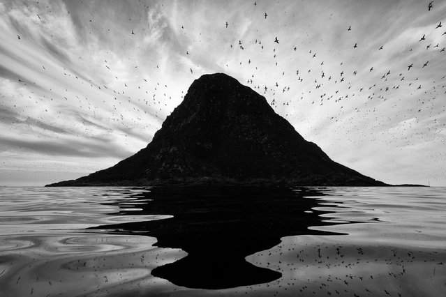 """Runner-up, birds: Reflection of a bird cliff – Espen Bergersen (Norway). """"This is the bird cliff of Bleiksøy, near Andøya in north Norway. It is the breeding ground of thousands of puffins and many other bird species, and sometimes large flocks of them circle the island – a stunning view. This image was taken on a still day when the cliff and the birds were reflected in the unruffled water in total perfection. A light swell kept changing the reflection, and I took a series of photographs, of which this one turned out to be my favourite"""". (Photo by Espen Bergersen/2019 GDT European Wildlife Photographer of the Year)"""