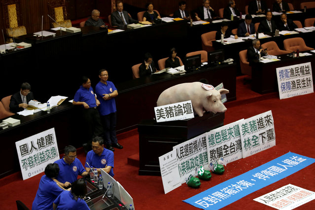 A dummy of a pig is placed by Kuomintang's legislators as they occupy the podium of the legislative chamber to block Premier Lin Chuan from delivering his first policy report, and oppose the imports of U.S. pork containing traces of the leanness-enhancing agent ractopamine at the Legislative Yuan in Taipei, Taiwan May 31, 2016. (Photo by Tyrone Siu/Reuters)