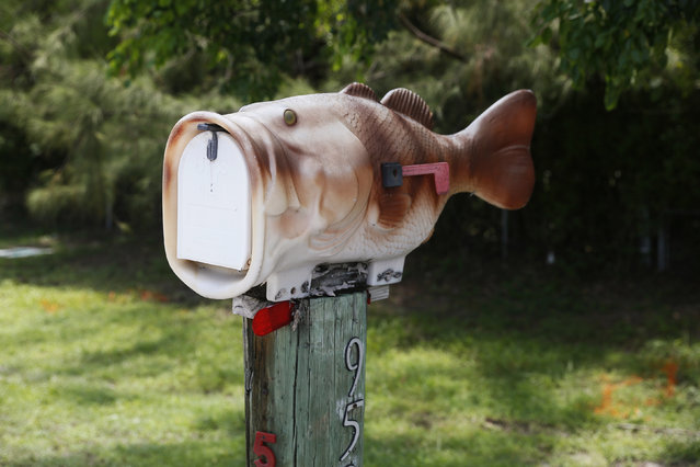 A mailbox in the shape of a fish is seen along the highway US-1 in the Lower Keys near Key Largo in Florida, July 10, 2014. (Photo by Wolfgang Rattay/Reuters)