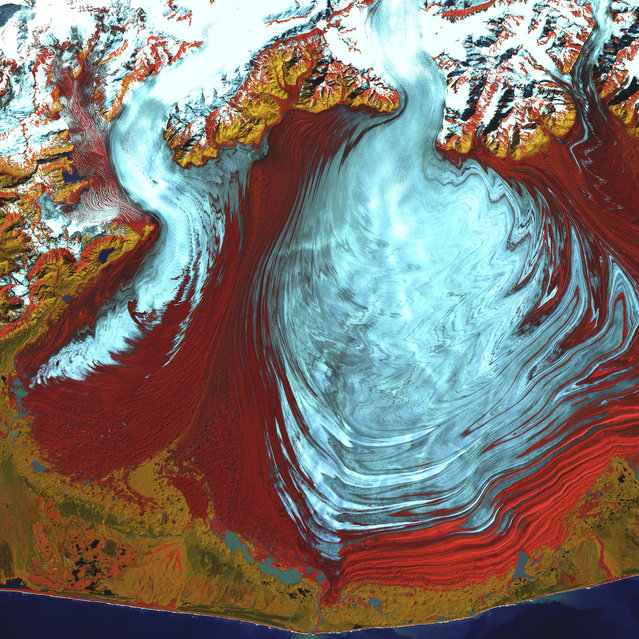 Malaspina Glacier, Alaska. The tongue of the Malaspina Glacier, one of the largest piedmont glaciers in the world, fills most of this image. The Malaspina lies west of Yakutat Bay in Alaska and covers roughly 3,900 sq km. This image was acquired on August 31, 2000, by Landsat 7′s Enhanced Thematic Mapper plus (ETM+) sensor. This is a false-color composite image made using infrared, near infrared, and green wavelengths, and has been sharpened using the sensor's panchromatic band. (Photo by NASA/GSFC/USGS EROS Data Center)