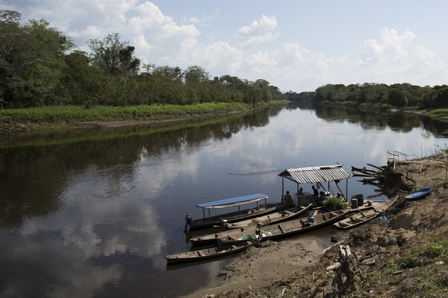 Residents are seen on the banks of the Parana do Amana river at Vila Nova do Amana community in the Sustainable Development Reserve, in Amazonas state, Brazil, September 22, 2015. (Photo by Bruno Kelly/Reuters)