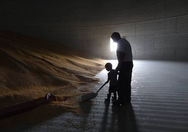"""""""Grandpa's Helper"""". Photo by Jenny Braun (Hampton, Minnesota). Photographed in Hampton, Minnesota, July 2012."""