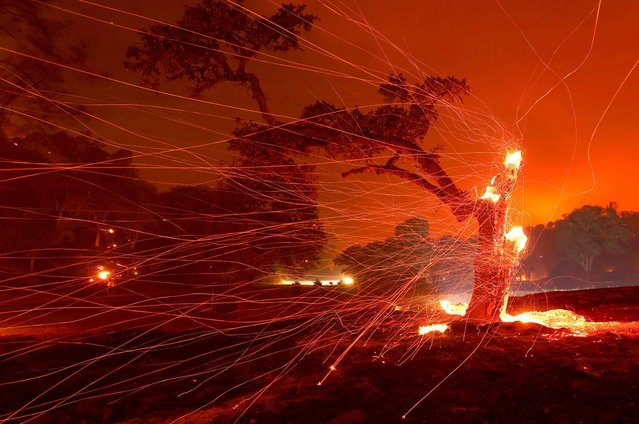 Embers blow off a burned tree after the LNU Lightning Complex Fire burned through the area on August 18, 2020 in Napa, California. The LNU Lightning Complex Fire continues to burn near Lake Berryessa near the town of Napa. The fire is zero percent contained. (Photo by Justin Sullivan/Getty Images)