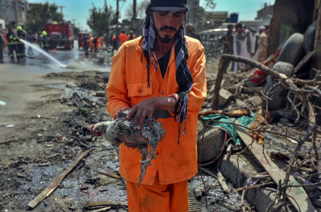 An municipality worker carries an injured hen after an explosion in Kabul, Afghanistan, 09 September 2020. According to Kabul Police spokesperson Tariq Aryan, at least 10 people were killed and 15 other wounded during an expolsion targeting Afghanistan's vice president Amrullah Saleh. (Photo by Jawad Jalali/EPA/EFE)