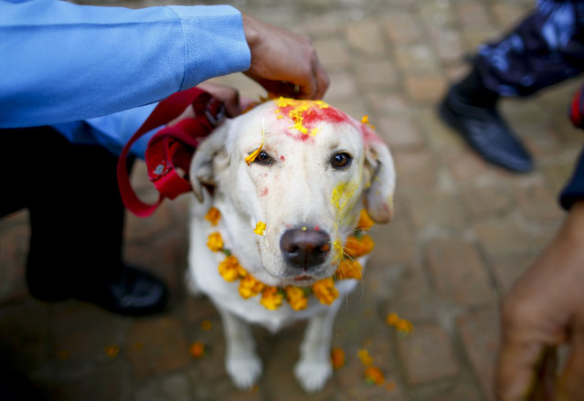 A police officer sprinkles colored powder onto a police dog at Nepal's Central Police Dog Training School during a dog worship day as part of the Diwali festival, also known as Tihar Festival, in Kathmandu, Nepal, 10 November 2015. The Tihar festival is the second major festival for Nepalese Hindus and this year is held from 10 November 2015. (Photo by Narendra Shrestha/EPA)