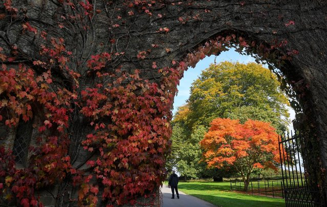 Visitors view the autumn foliage and colours in the gardens and estate at Stourhead in south west Britain, October 21, 2016. (Photo by Toby Melville/Reuters)