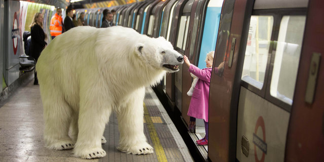An animatronic polar bear visits the London Underground on January 23, 2015, to mark the launch of Fortitude, Sky Atlantic&Otilde's new drama starring Stanley Tucci, Michael Gambon and Christopher Ecclestone, which premieres on Thursday 29th January at 9pm.  (Photo by David Parry/PA Wire)