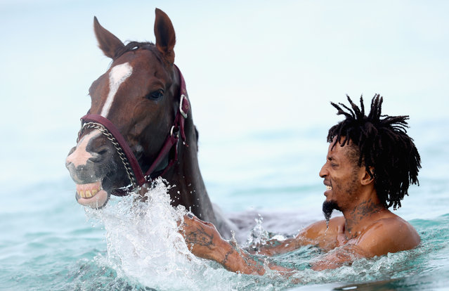 Horses from the Garrison Savannah, who are involved in celebrations today to mark 50 years of Independence, are washed in the sea first thing in the morning on December 1, 2016 in Bridgetown, Barbados. Prince Harry is visiting the Caribbean marking the 35th Anniversary of Independence in Antigua and Barbuda and the 50th Anniversary of Independence in Barbados and Guyana. (Photo by Chris Jackson/Getty Images)