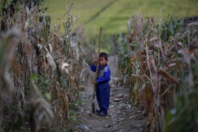 A North Korean boy holds a spade in a corn field in area damaged by floods and typhoons in the Soksa-Ri collective farm in the South Hwanghae province September 29, 2011. (Photo by Damir Sagolj/Reuters)