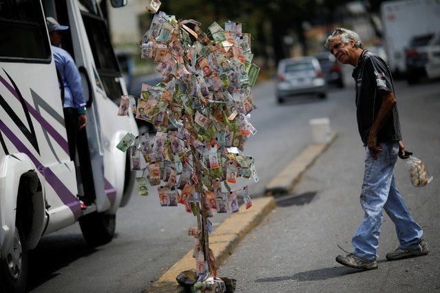 A man looks at Venezuelan bolivar notes hung to resemble a tree, in Caracas, Venezuela on March 6, 2019. (Photo by Carlos Garcia Rawlins/Reuters)