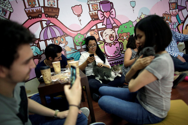 """Customers play with cats inside """"Meow"""" cafe, where diners can play, interact or adopt cats given away by their former owners or rescued from the streets, in Monterrey, Mexico, May 14, 2016. (Photo by Daniel Becerril/Reuters)"""