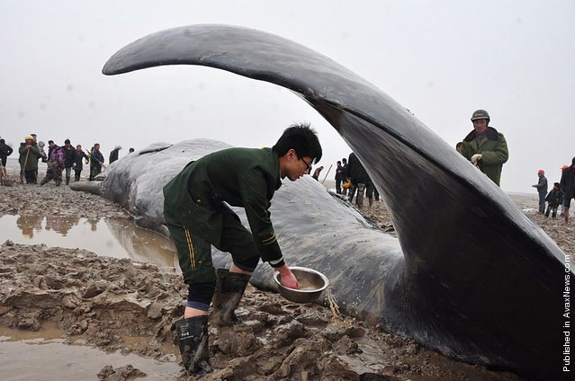 A dead sperm whale is seen on the beach on March 18, 2012 in Yancheng, Jiangsu Province of China