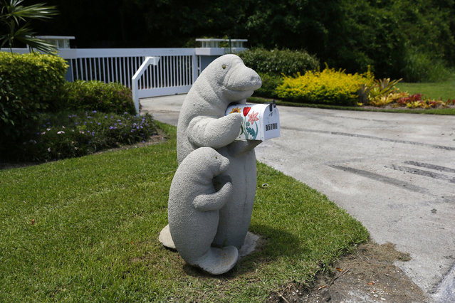 Models of an adult and baby manatee hold a mailbox along the highway US-1 in the Lower Keys near Key Largo in Florida, July 10, 2014. (Photo by Wolfgang Rattay/Reuters)