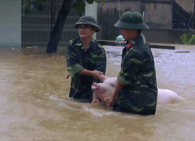Two soldiers walk a pig through flood water in northern province of Thanh Hoa, Vietnam, Wednesday, October 11, 2017. Floods triggered by a tropical depression in Vietnam have killed 15 people and left eight others missing. The storm hit central Vietnam on Tuesday, bringing heavy rain to the region and to parts of northern Vietnam. (Photo mby Trinh Duy Hung/Vietnam News Agency via AP Photo)
